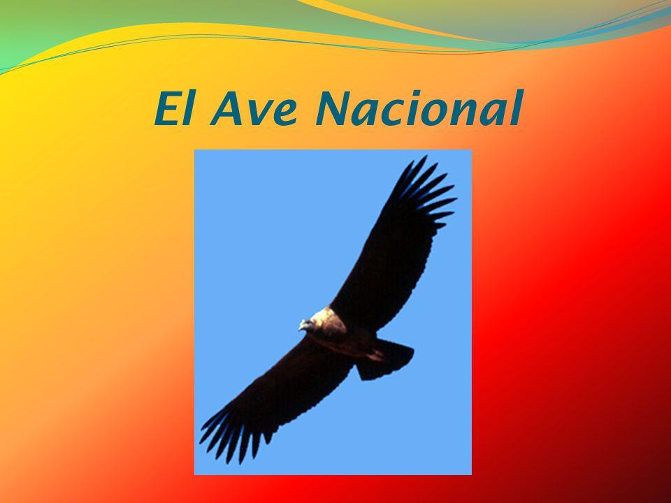 El Ave Nacional