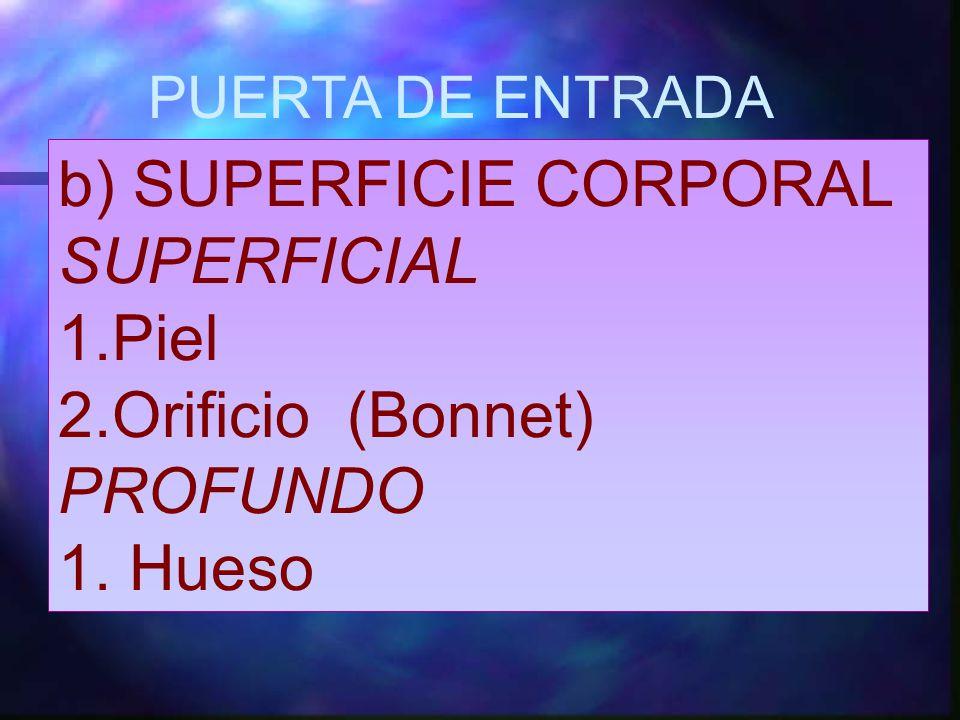 b) SUPERFICIE CORPORAL SUPERFICIAL Piel Orificio (Bonnet) PROFUNDO