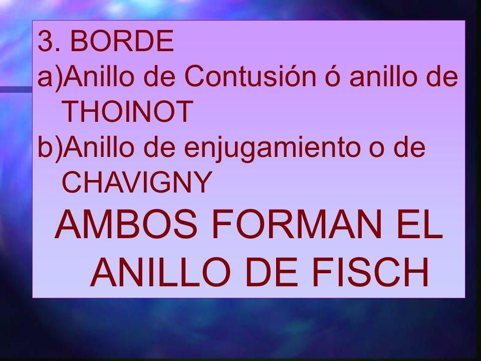 AMBOS FORMAN EL ANILLO DE FISCH
