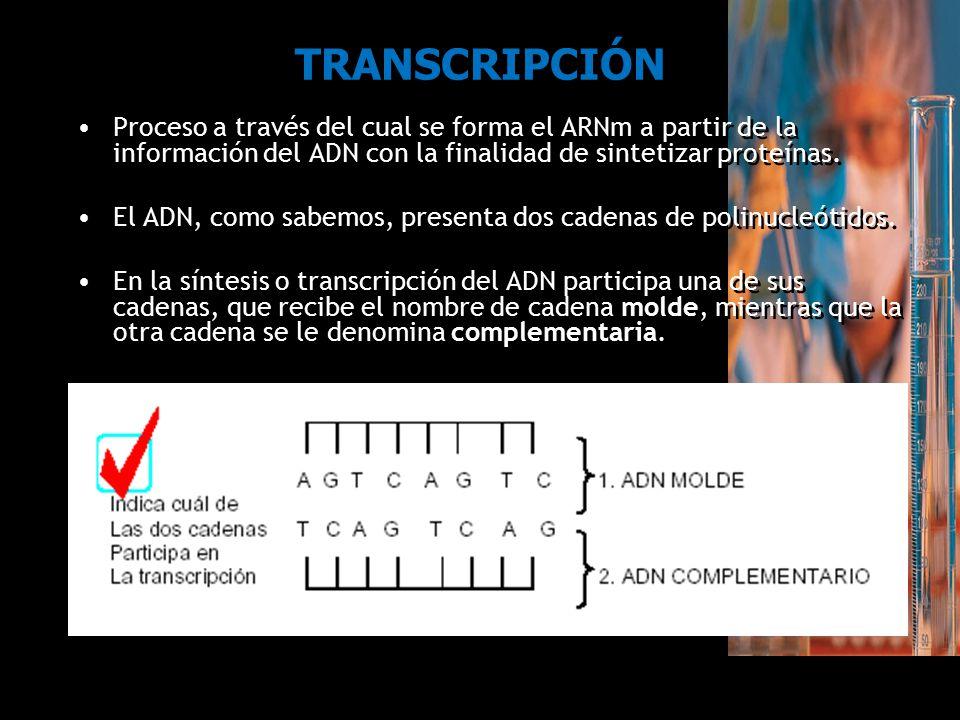 TRANSCRIPCIÓN Proceso a través del cual se forma el ARNm a partir de la información del ADN con la finalidad de sintetizar proteínas.