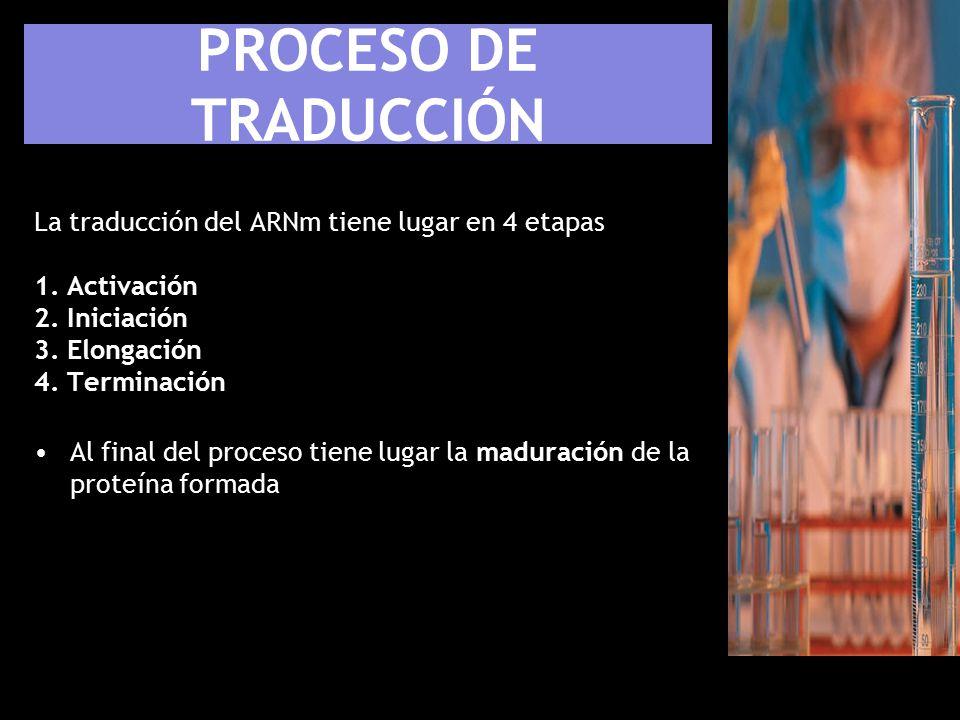 PROCESO DE TRADUCCIÓN La traducción del ARNm tiene lugar en 4 etapas 1. Activación 2. Iniciación 3. Elongación 4. Terminación.