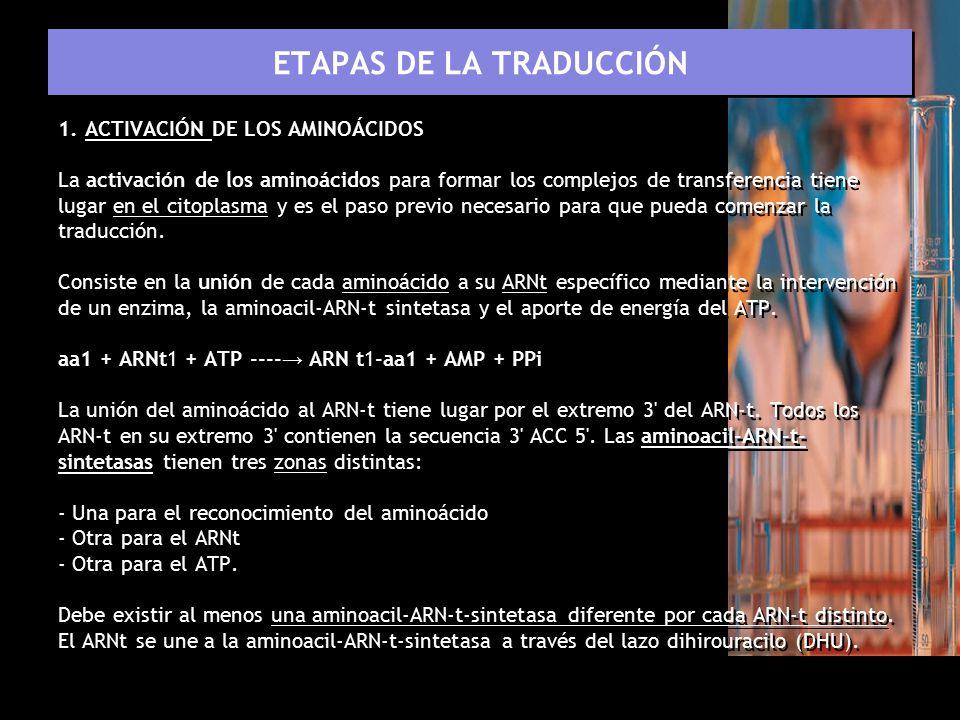 ETAPAS DE LA TRADUCCIÓN
