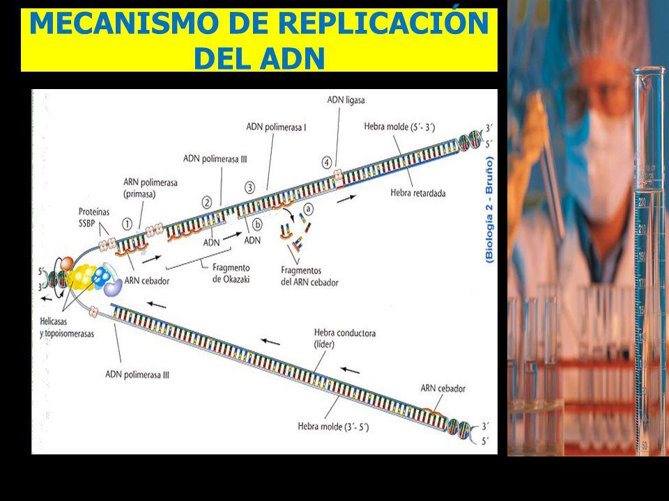 MECANISMO DE REPLICACIÓN DEL ADN