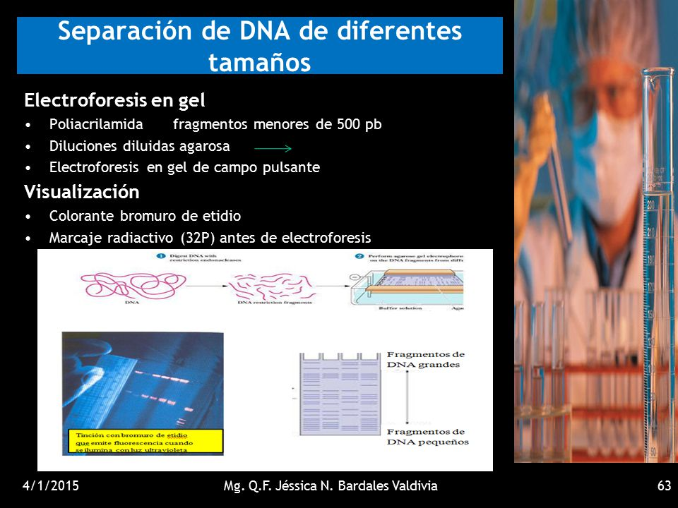 Separación de DNA de diferentes tamaños