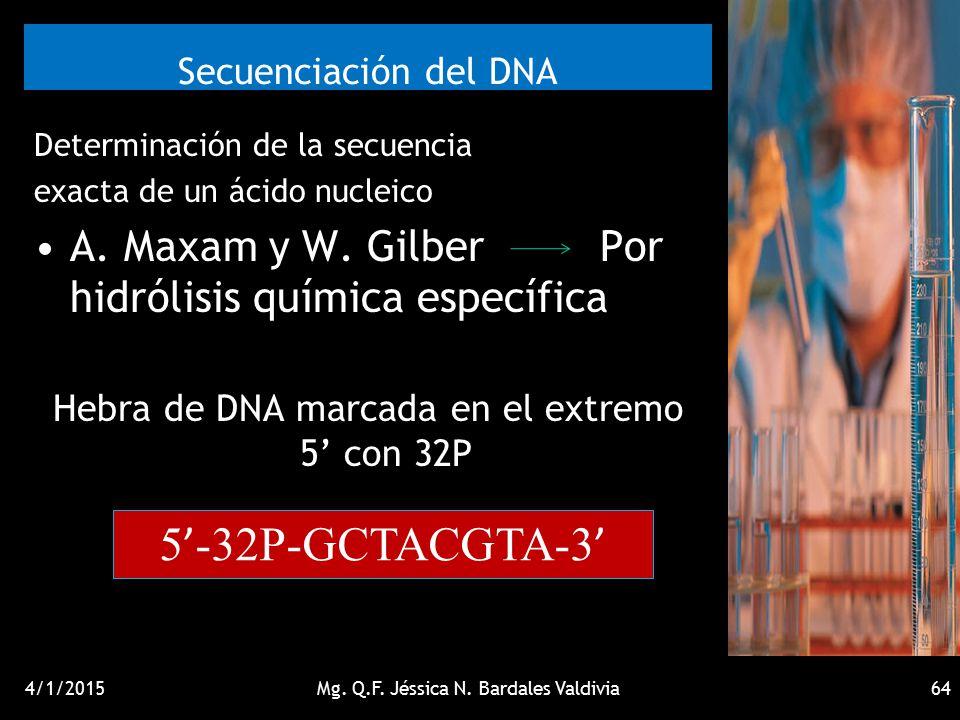 Secuenciación del DNA 5'-32P-GCTACGTA-3'