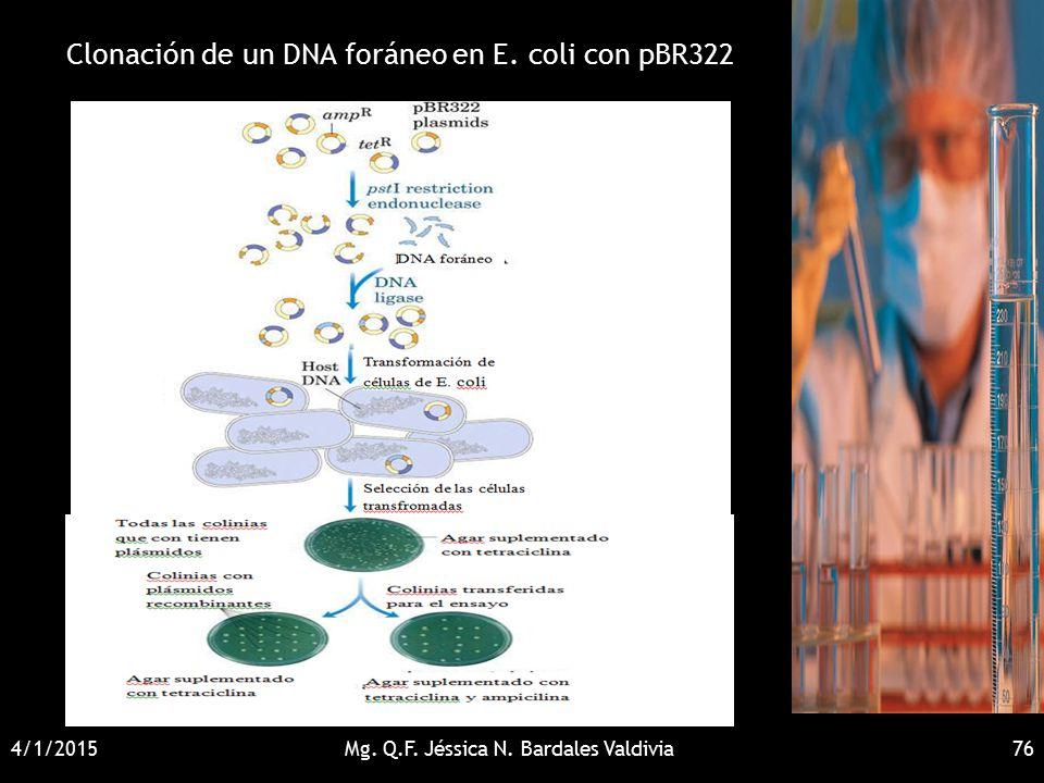 Clonación de un DNA foráneo en E. coli con pBR322