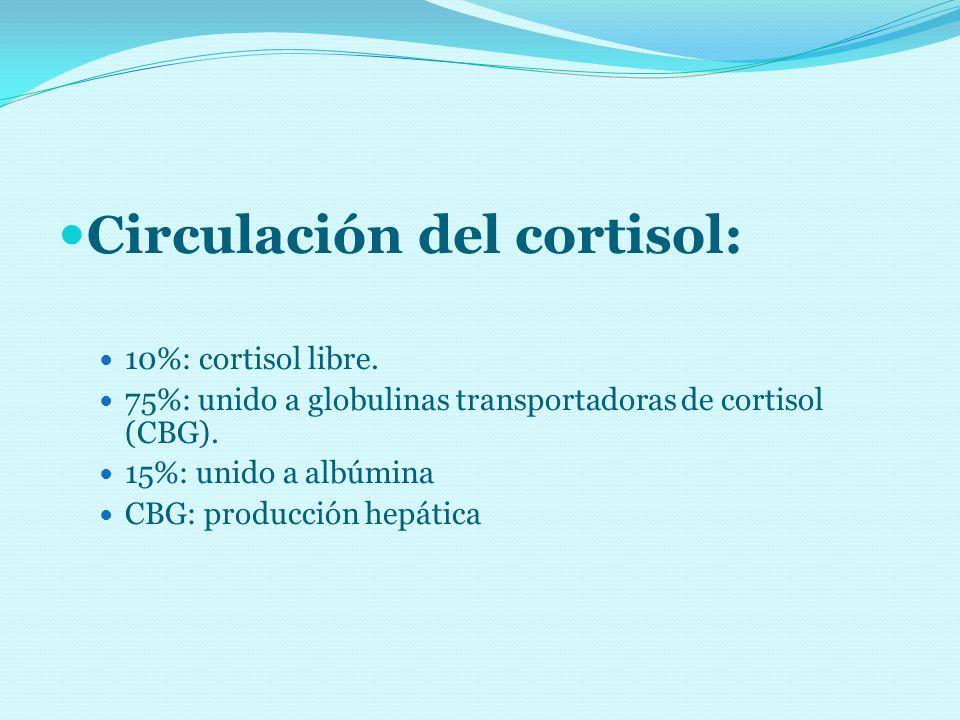 Circulación del cortisol: