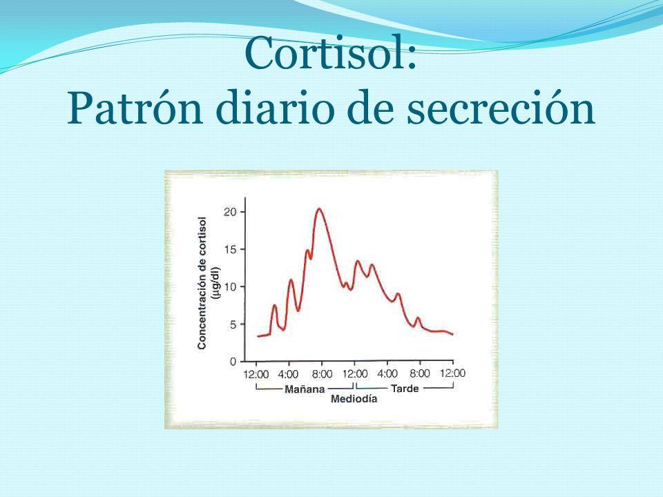Cortisol: Patrón diario de secreción
