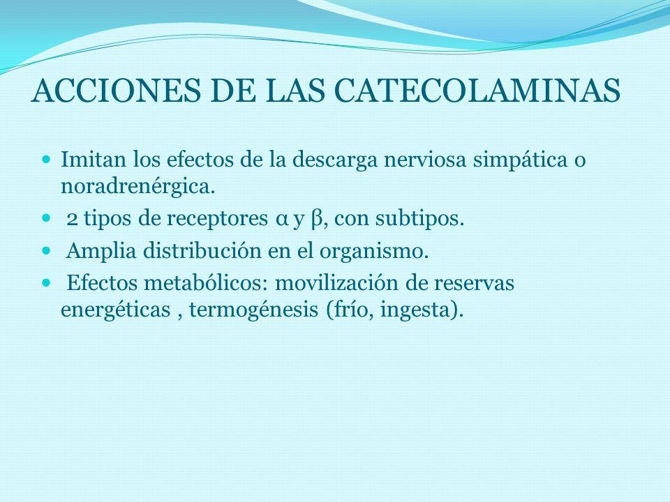 ACCIONES DE LAS CATECOLAMINAS