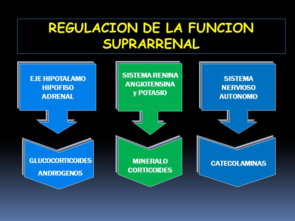 REGULACION DE LA FUNCION SUPRARRENAL