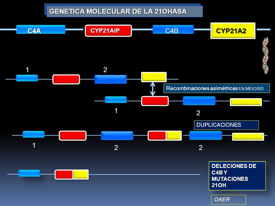 GENETICA MOLECULAR DE LA 21OHASA