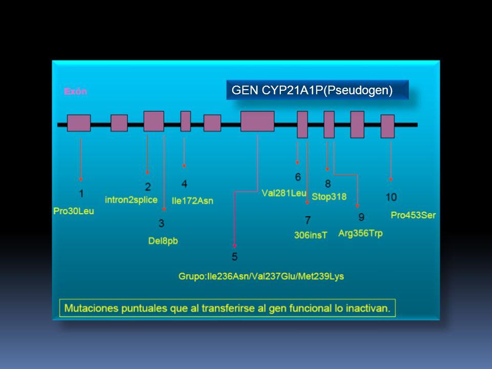 GEN CYP21A1P(Pseudogen)