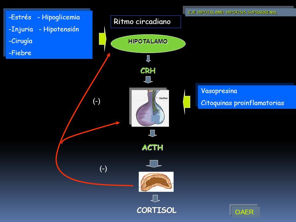 -Estrés - Hipoglicemia Ritmo circadiano