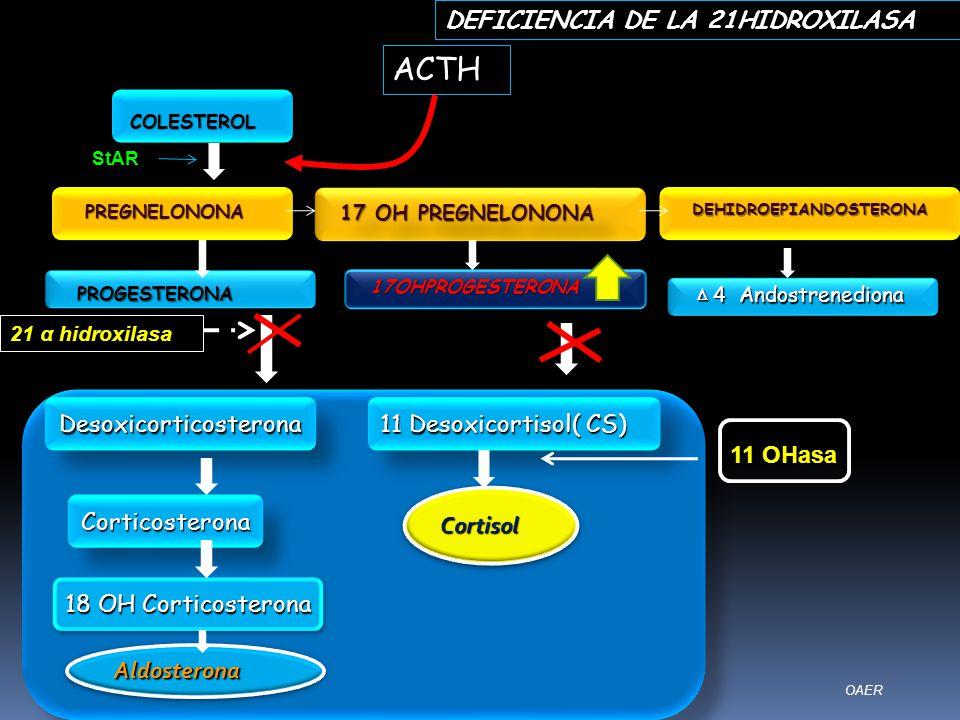 Desoxicorticosterona