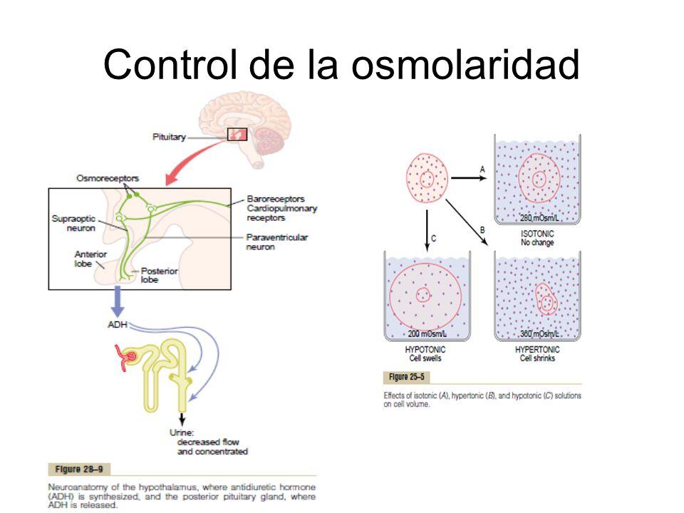 Control de la osmolaridad