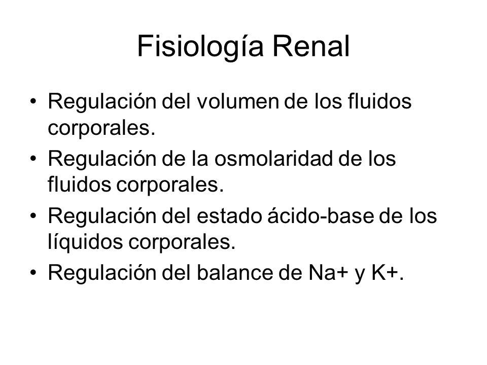 Fisiología Renal Regulación del volumen de los fluidos corporales.
