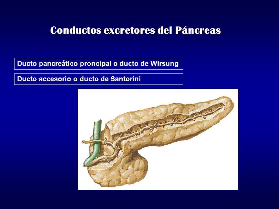 Conductos excretores del Páncreas