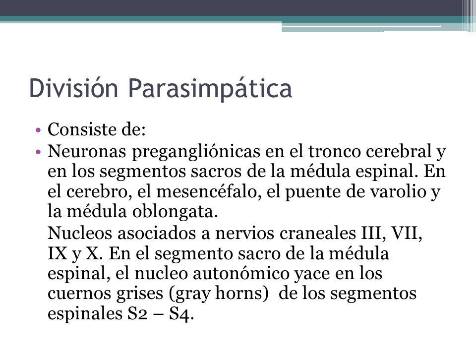 División Parasimpática