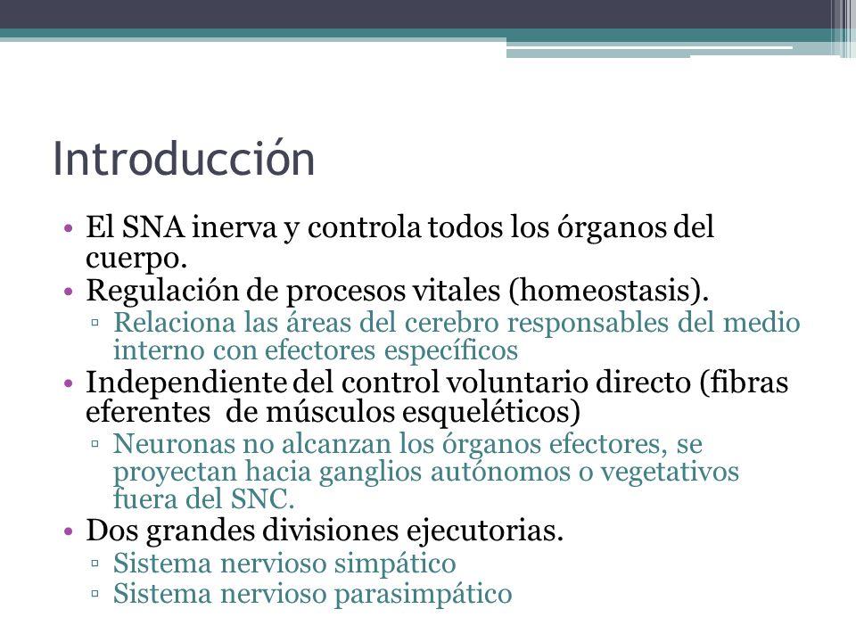 Introducción El SNA inerva y controla todos los órganos del cuerpo.