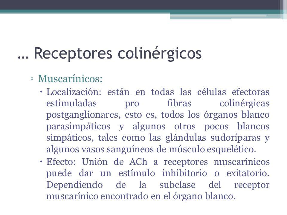 … Receptores colinérgicos