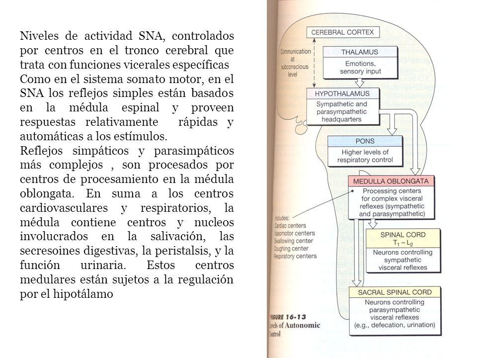 Niveles de actividad SNA, controlados por centros en el tronco cerebral que trata con funciones vicerales específicas