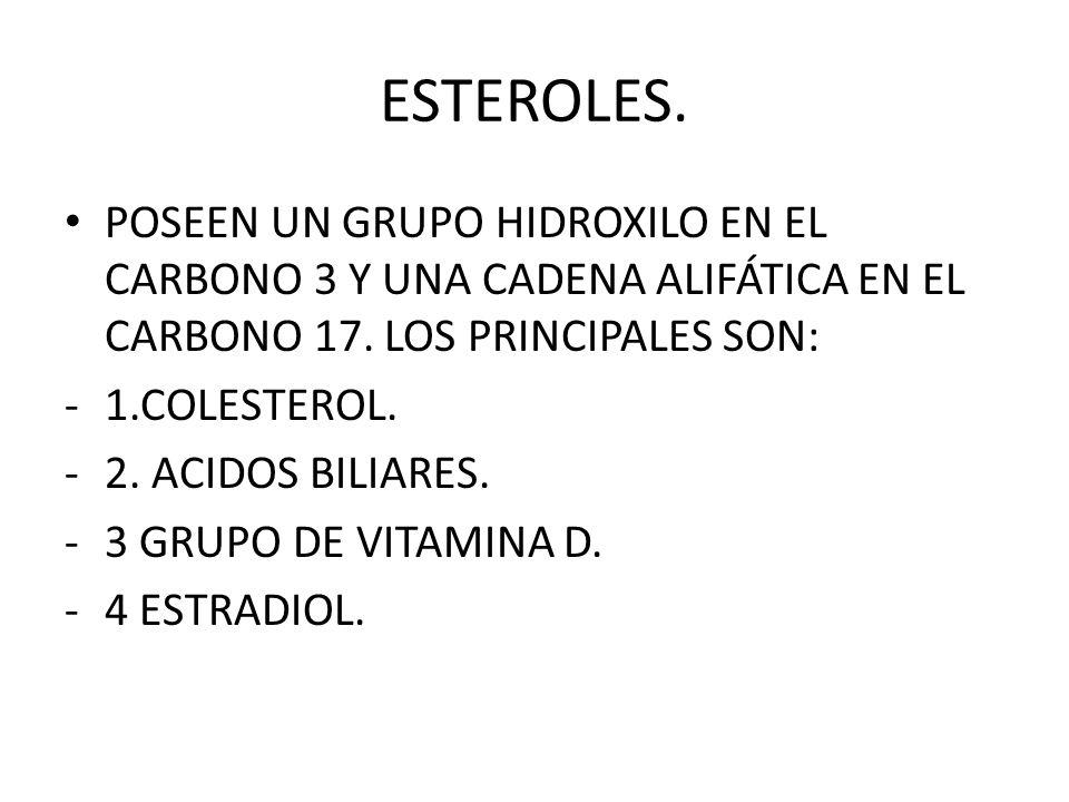 ESTEROLES. POSEEN UN GRUPO HIDROXILO EN EL CARBONO 3 Y UNA CADENA ALIFÁTICA EN EL CARBONO 17. LOS PRINCIPALES SON:
