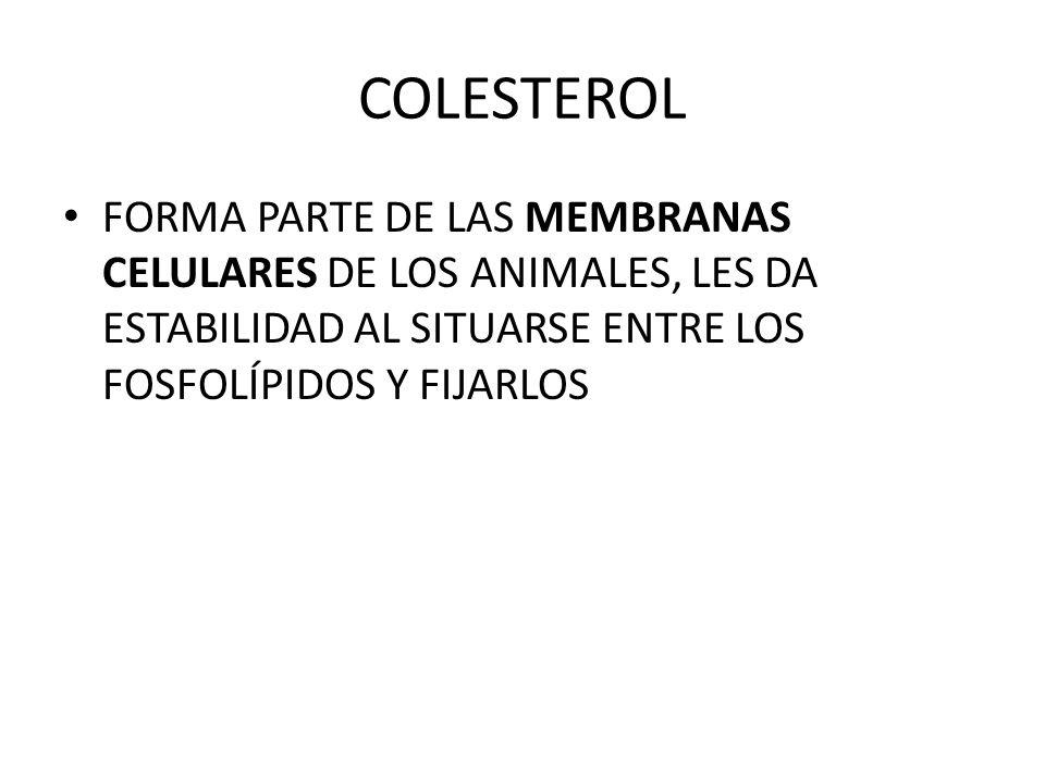 COLESTEROL FORMA PARTE DE LAS MEMBRANAS CELULARES DE LOS ANIMALES, LES DA ESTABILIDAD AL SITUARSE ENTRE LOS FOSFOLÍPIDOS Y FIJARLOS.