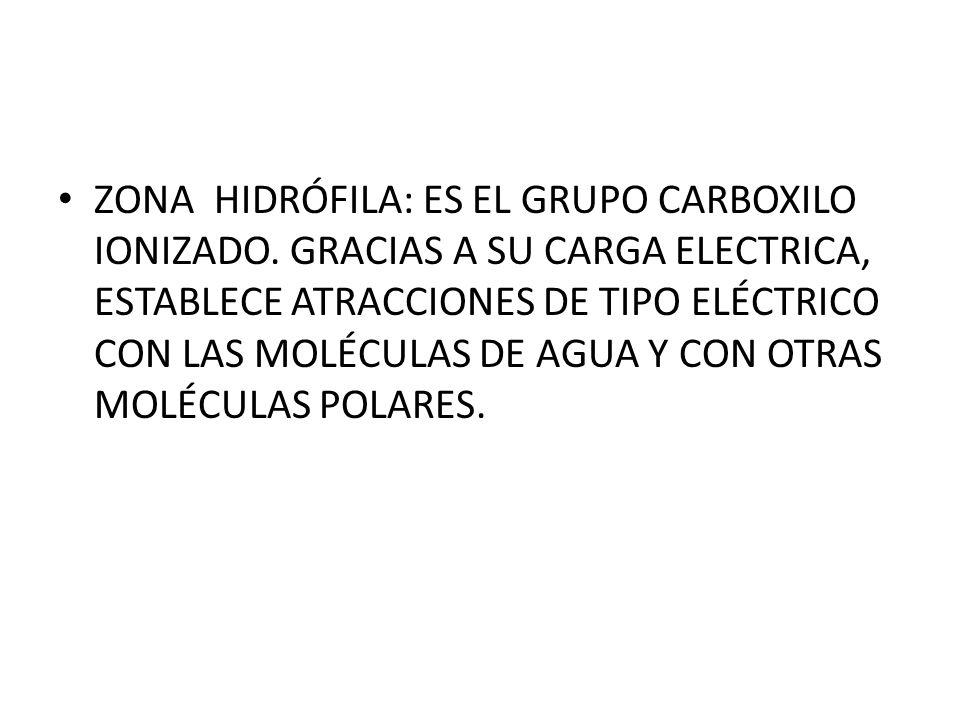 ZONA HIDRÓFILA: ES EL GRUPO CARBOXILO IONIZADO
