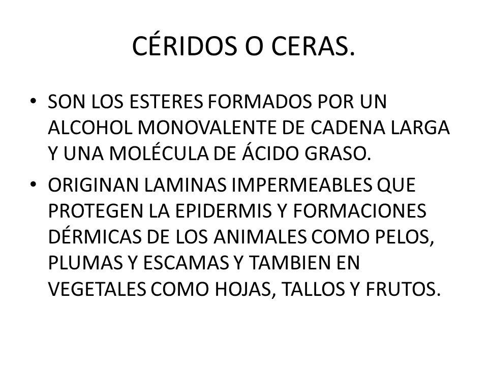 CÉRIDOS O CERAS. SON LOS ESTERES FORMADOS POR UN ALCOHOL MONOVALENTE DE CADENA LARGA Y UNA MOLÉCULA DE ÁCIDO GRASO.