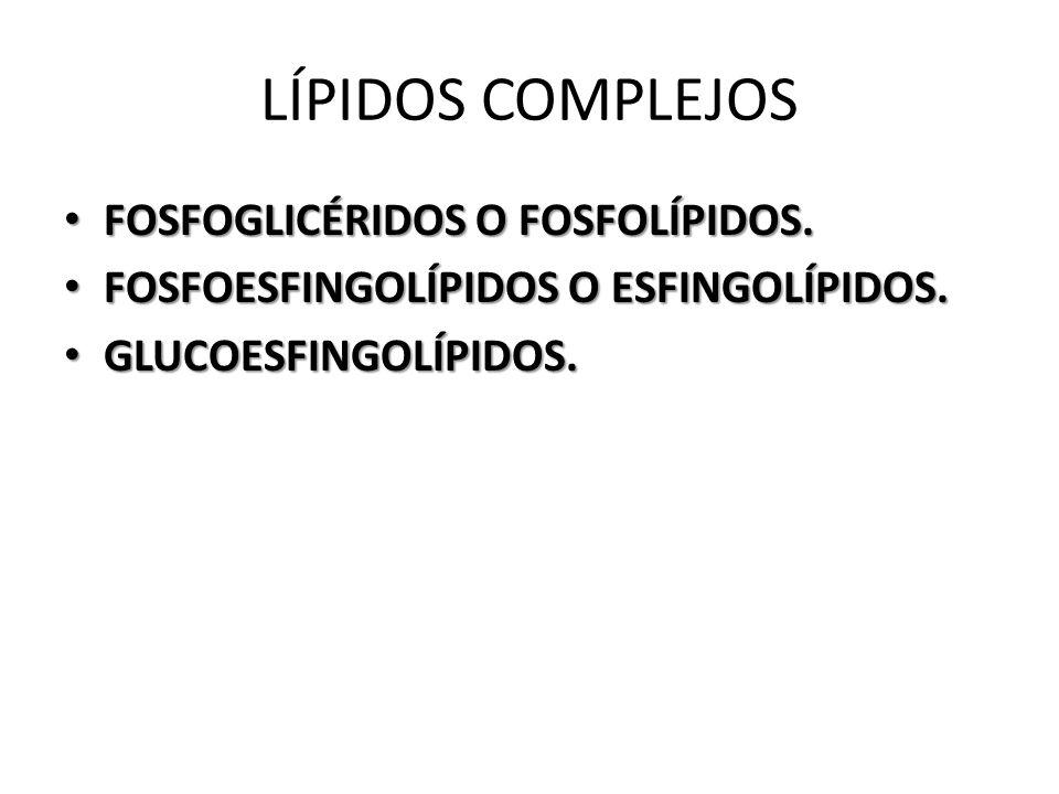 LÍPIDOS COMPLEJOS FOSFOGLICÉRIDOS O FOSFOLÍPIDOS.