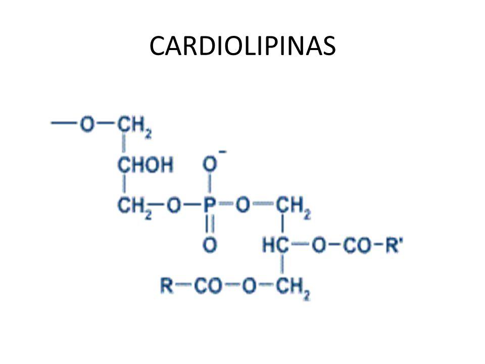CARDIOLIPINAS