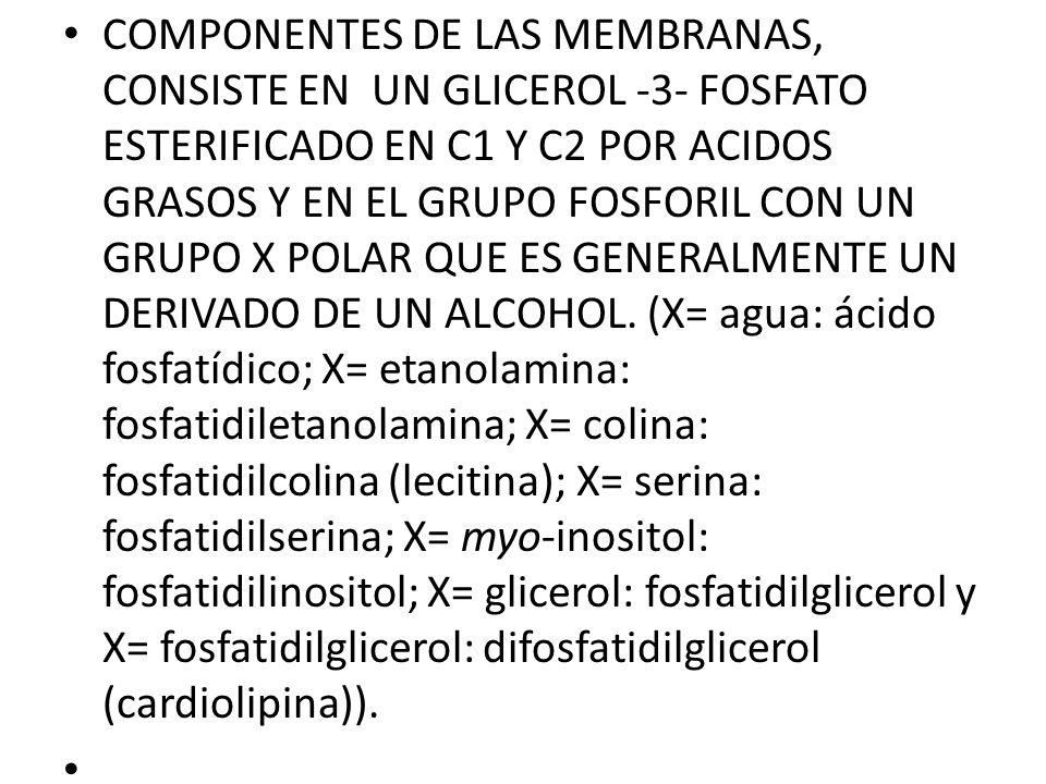 COMPONENTES DE LAS MEMBRANAS, CONSISTE EN UN GLICEROL -3- FOSFATO ESTERIFICADO EN C1 Y C2 POR ACIDOS GRASOS Y EN EL GRUPO FOSFORIL CON UN GRUPO X POLAR QUE ES GENERALMENTE UN DERIVADO DE UN ALCOHOL. (X= agua: ácido fosfatídico; X= etanolamina: fosfatidiletanolamina; X= colina: fosfatidilcolina (lecitina); X= serina: fosfatidilserina; X= myo-inositol: fosfatidilinositol; X= glicerol: fosfatidilglicerol y X= fosfatidilglicerol: difosfatidilglicerol (cardiolipina)).