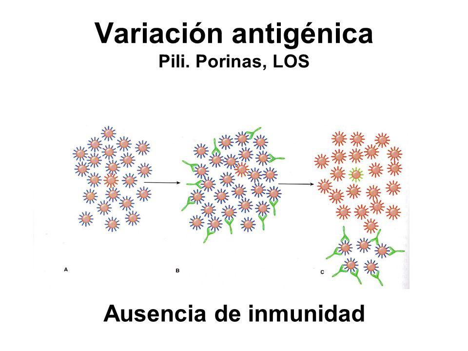 Variación antigénica Pili. Porinas, LOS