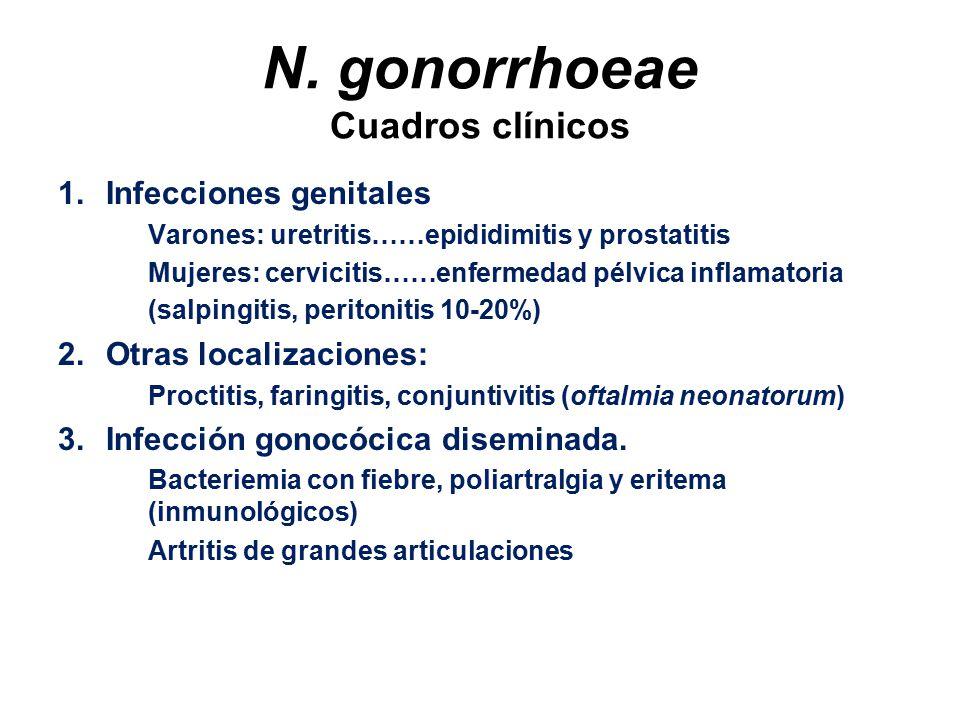 N. gonorrhoeae Cuadros clínicos
