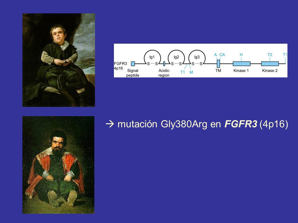  mutación Gly380Arg en FGFR3 (4p16)