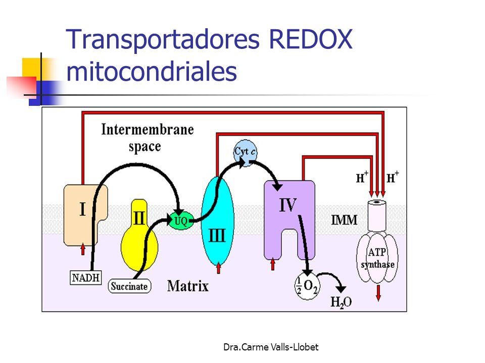 Transportadores REDOX mitocondriales