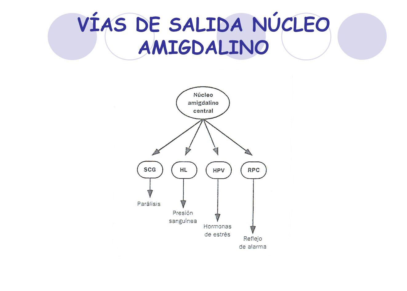 VÍAS DE SALIDA NÚCLEO AMIGDALINO