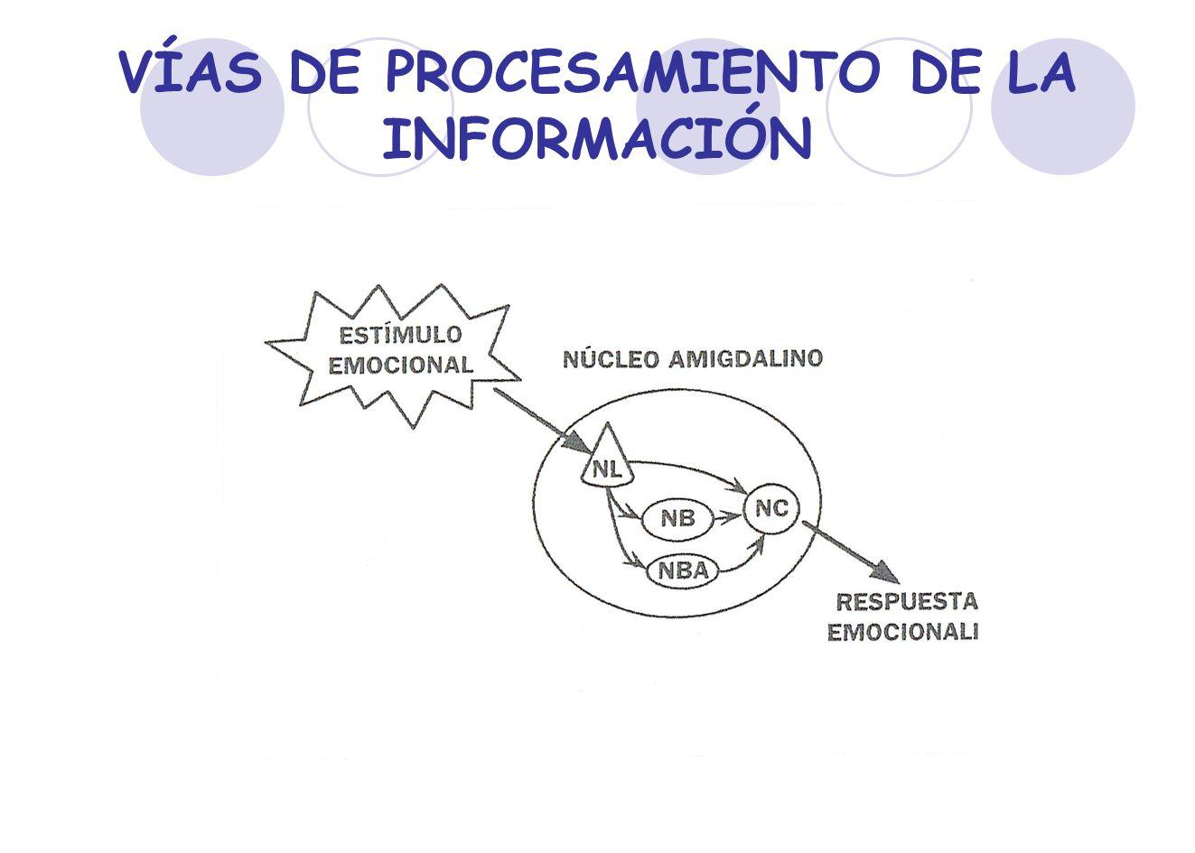 VÍAS DE PROCESAMIENTO DE LA INFORMACIÓN
