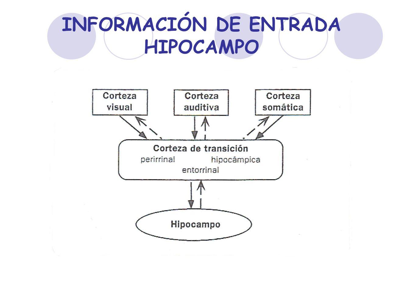 INFORMACIÓN DE ENTRADA HIPOCAMPO