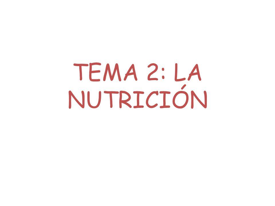 TEMA 2: LA NUTRICIÓN
