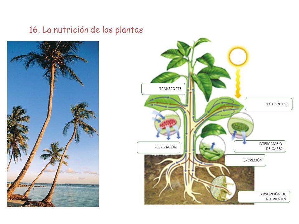 16. La nutrición de las plantas