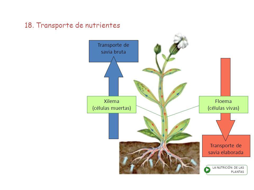18. Transporte de nutrientes