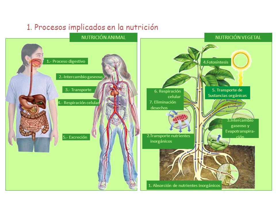 1. Absorción de nutrientes inorgánicos