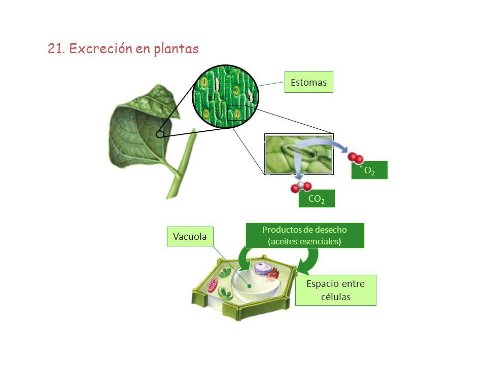 Productos de desecho (aceites esenciales)