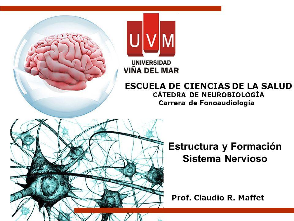 Estructura y Formación Sistema Nervioso