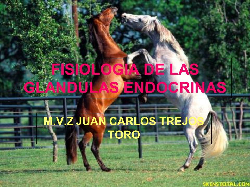 FISIOLOGIA DE LAS GLANDULAS ENDOCRINAS