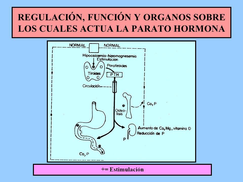 REGULACIÓN, FUNCIÓN Y ORGANOS SOBRE LOS CUALES ACTUA LA PARATO HORMONA