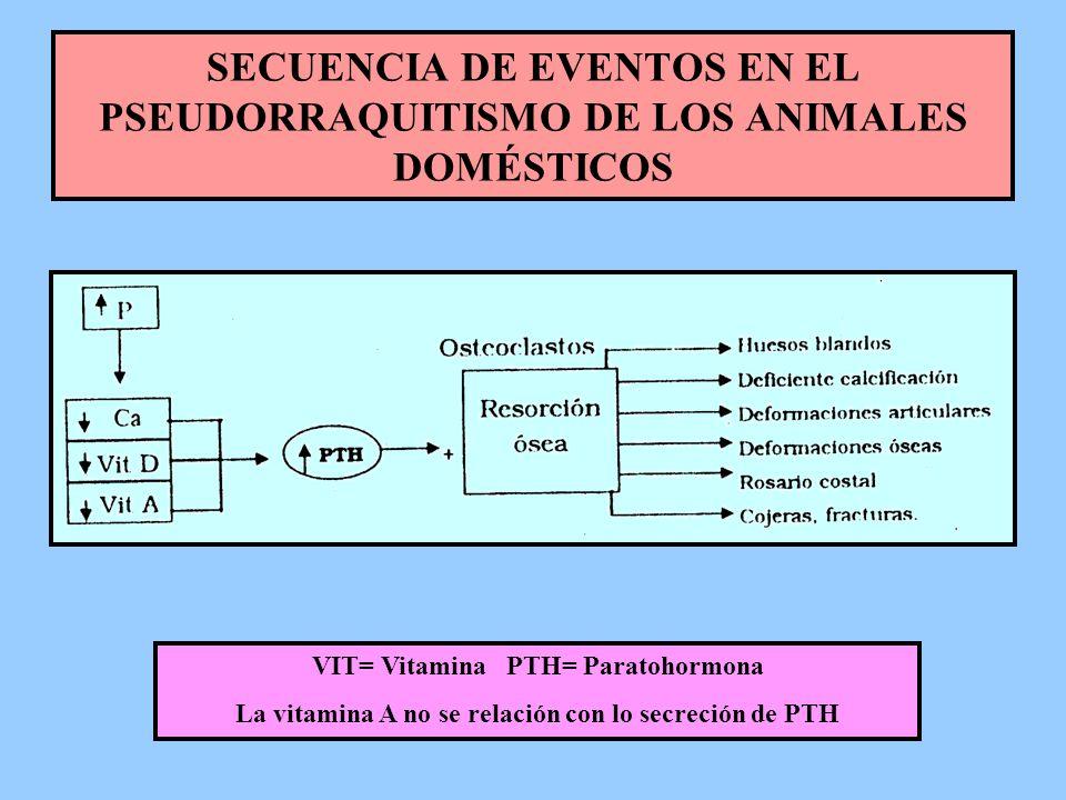 SECUENCIA DE EVENTOS EN EL PSEUDORRAQUITISMO DE LOS ANIMALES DOMÉSTICOS