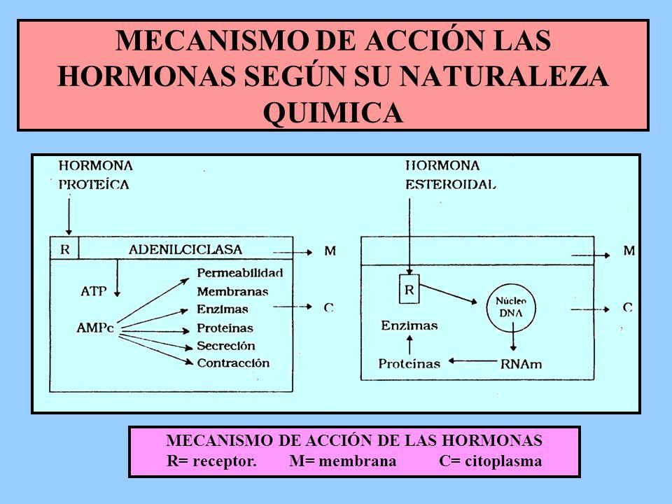 MECANISMO DE ACCIÓN LAS HORMONAS SEGÚN SU NATURALEZA QUIMICA