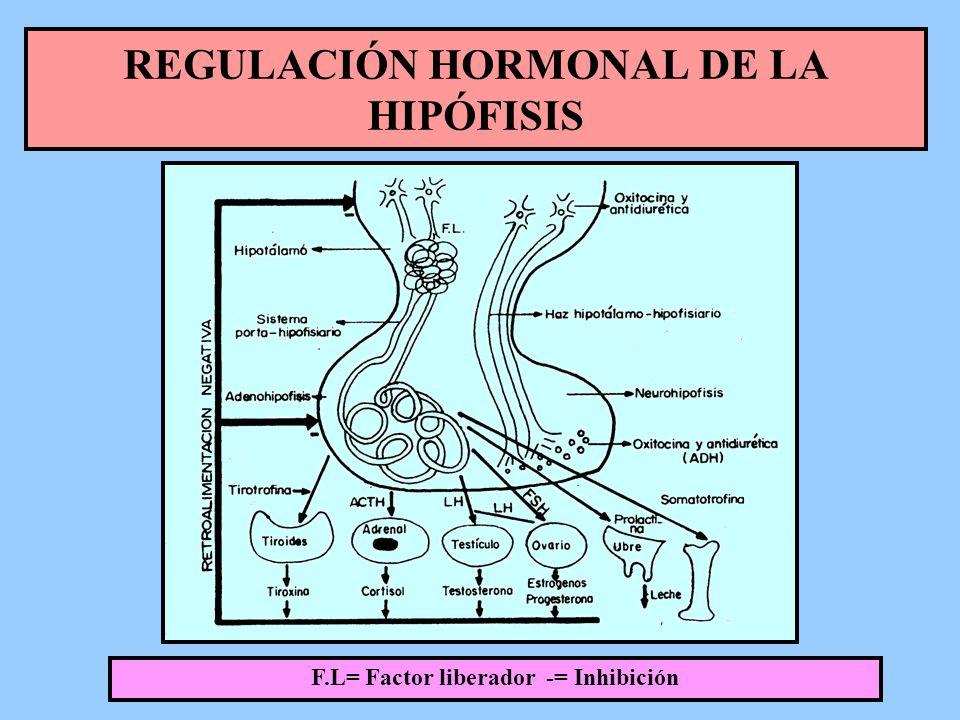 REGULACIÓN HORMONAL DE LA HIPÓFISIS